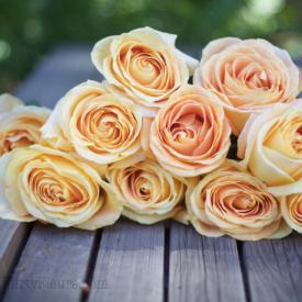 Image by Flirty Fleurs (https://flirtyfleurs.com/garden-roses/)