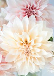 Flowers by Rebecca Plotnick Photography (https://rebeccaplotnick.com/)