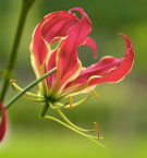 Image by Gardenia (https://www.gardenia.net/)